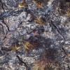 Ąžuolinis niūravabalis - Hypulus quercinus | Fotografijos autorius : Giedrius Markevičius | © Macrogamta.lt | Šis tinklapis priklauso bendruomenei kuri domisi makro fotografija ir fotografuoja gyvąjį makro pasaulį.