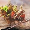 Apsiuvos - Limnephilus flavicornis lerva | Fotografijos autorius : Gintautas Steiblys | © Macrogamta.lt | Šis tinklapis priklauso bendruomenei kuri domisi makro fotografija ir fotografuoja gyvąjį makro pasaulį.