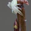 Geltonasis žiedvoris - Misumena vatia   Fotografijos autorius : Žilvinas Pūtys   © Macrogamta.lt   Šis tinklapis priklauso bendruomenei kuri domisi makro fotografija ir fotografuoja gyvąjį makro pasaulį.