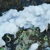 Drebutis - Exidia thuretiana ?? | Fotografijos autorius : Gintautas Steiblys | © Macrogamta.lt | Šis tinklapis priklauso bendruomenei kuri domisi makro fotografija ir fotografuoja gyvąjį makro pasaulį.