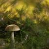 Lepšė - Leccinum scabrum | Fotografijos autorius : Vidas Brazauskas | © Macrogamta.lt | Šis tinklapis priklauso bendruomenei kuri domisi makro fotografija ir fotografuoja gyvąjį makro pasaulį.