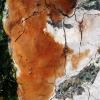 Taškuotoji kempinė - Fomitiporia punctata | Fotografijos autorius : Aleksandras Stabrauskas | © Macrogamta.lt | Šis tinklapis priklauso bendruomenei kuri domisi makro fotografija ir fotografuoja gyvąjį makro pasaulį.