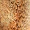 Taškuotoji kempinė - Fomitiporia punctata | Fotografijos autorius : Ramunė Vakarė | © Macrogamta.lt | Šis tinklapis priklauso bendruomenei kuri domisi makro fotografija ir fotografuoja gyvąjį makro pasaulį.