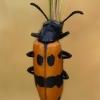 Skaudvabalis - Mylabris variabilis | Fotografijos autorius : Gintautas Steiblys | © Macrogamta.lt | Šis tinklapis priklauso bendruomenei kuri domisi makro fotografija ir fotografuoja gyvąjį makro pasaulį.