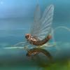 Lašalas - Ephemeroptera | Fotografijos autorius : Gintautas Steiblys | © Macrogamta.lt | Šis tinklapis priklauso bendruomenei kuri domisi makro fotografija ir fotografuoja gyvąjį makro pasaulį.