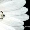 Geltonasis žiedvoris - Misumena vatia | Fotografijos autorius : Alma Totorytė | © Macrogamta.lt | Šis tinklapis priklauso bendruomenei kuri domisi makro fotografija ir fotografuoja gyvąjį makro pasaulį.