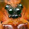 Paprastasis slampinėlis - Trochosa terricola | Fotografijos autorius : Lukas Jonaitis | © Macrogamta.lt | Šis tinklapis priklauso bendruomenei kuri domisi makro fotografija ir fotografuoja gyvąjį makro pasaulį.