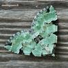 Colostygia pectinataria - Žalioji kolostygija | Fotografijos autorius : Arūnas Eismantas | © Macrogamta.lt | Šis tinklapis priklauso bendruomenei kuri domisi makro fotografija ir fotografuoja gyvąjį makro pasaulį.