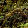 Žalsvapilkis plačiasparnis naktinukas - Parascotia fuliginaria | Fotografijos autorius : Romas Ferenca | © Macrogamta.lt | Šis tinklapis priklauso bendruomenei kuri domisi makro fotografija ir fotografuoja gyvąjį makro pasaulį.