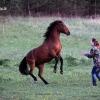Mergaičių šokis ... | Fotografijos autorius : Valdimantas Grigonis | © Macrogamta.lt | Šis tinklapis priklauso bendruomenei kuri domisi makro fotografija ir fotografuoja gyvąjį makro pasaulį.