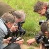 kaip 4 vilkai 1-ą avį pjovė... | Fotografijos autorius : Linas Mockus | © Macrogamta.lt | Šis tinklapis priklauso bendruomenei kuri domisi makro fotografija ir fotografuoja gyvąjį makro pasaulį.