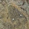 Plėšrusis vėlyvis - Eupsilia transversa | Fotografijos autorius : Armandas Kazlauskas | © Macrogamta.lt | Šis tinklapis priklauso bendruomenei kuri domisi makro fotografija ir fotografuoja gyvąjį makro pasaulį.