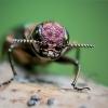 Siaurablizgis - Agrilus sp.  | Fotografijos autorius : Oskaras Venckus | © Macrogamta.lt | Šis tinklapis priklauso bendruomenei kuri domisi makro fotografija ir fotografuoja gyvąjį makro pasaulį.