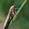 Keturtaškė kerpyė - Lithosia quadra | Fotografijos autorius : Oskaras Venckus | © Macrogamta.lt | Šis tinklapis priklauso bendruomenei kuri domisi makro fotografija ir fotografuoja gyvąjį makro pasaulį.