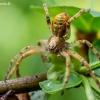 ??? | Fotografijos autorius : Oskaras Venckus | © Macrogamta.lt | Šis tinklapis priklauso bendruomenei kuri domisi makro fotografija ir fotografuoja gyvąjį makro pasaulį.