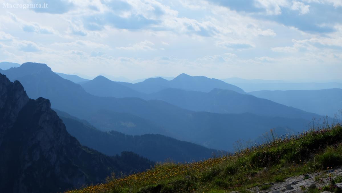 Tatrų kalnų mėlis. | Fotografijos autorius : Vitalijus Bačianskas | © Macrogamta.lt | Šis tinklapis priklauso bendruomenei kuri domisi makro fotografija ir fotografuoja gyvąjį makro pasaulį.