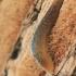 Tinklinis dirvašliužis - Deroceras reticulatum | Fotografijos autorius : Gintautas Steiblys | © Macrogamta.lt | Šis tinklapis priklauso bendruomenei kuri domisi makro fotografija ir fotografuoja gyvąjį makro pasaulį.