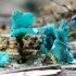 Žaliagrybis - Chlorociboria sp. | Fotografijos autorius : Romas Ferenca | © Macrogamta.lt | Šis tinklapis priklauso bendruomenei kuri domisi makro fotografija ir fotografuoja gyvąjį makro pasaulį.