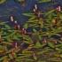 Būdmainis rūgtis - Polygonum amphibia (Persicaria amphibia) | Fotografijos autorius : Kęstutis Obelevičius | © Macrogamta.lt | Šis tinklapis priklauso bendruomenei kuri domisi makro fotografija ir fotografuoja gyvąjį makro pasaulį.