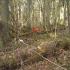 Biržų giria 2 | Fotografijos autorius : Vytautas Tamutis | © Macrogamta.lt | Šis tinklapis priklauso bendruomenei kuri domisi makro fotografija ir fotografuoja gyvąjį makro pasaulį.