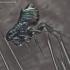 Blusa - Ceratophyllus sp.   Fotografijos autorius : Gintautas Steiblys   © Macrogamta.lt   Šis tinklapis priklauso bendruomenei kuri domisi makro fotografija ir fotografuoja gyvąjį makro pasaulį.