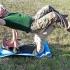 Dž. Steiblienės foto. Gimnastika | Fotografijos autorius : Gintautas Steiblys | © Macrogamta.lt | Šis tinklapis priklauso bendruomenei kuri domisi makro fotografija ir fotografuoja gyvąjį makro pasaulį.