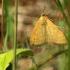 Gelsvoji sitochroja - Sitochroa verticalis | Fotografijos autorius : Ramunė Vakarė | © Macrogamta.lt | Šis tinklapis priklauso bendruomenei kuri domisi makro fotografija ir fotografuoja gyvąjį makro pasaulį.