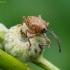Gilinis vaisiastraublis - Curculio glandium   Fotografijos autorius : Romas Ferenca   © Macrogamta.lt   Šis tinklapis priklauso bendruomenei kuri domisi makro fotografija ir fotografuoja gyvąjį makro pasaulį.