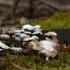 Ąžuolinis skiautenėlis - Panellus stipticus   Fotografijos autorius : Vidas Brazauskas   © Macrogamta.lt   Šis tinklapis priklauso bendruomenei kuri domisi makro fotografija ir fotografuoja gyvąjį makro pasaulį.