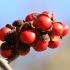 Japoninė magnolija - Magnolia kobus | Fotografijos autorius : Ramunė Vakarė | © Macrogamta.lt | Šis tinklapis priklauso bendruomenei kuri domisi makro fotografija ir fotografuoja gyvąjį makro pasaulį.