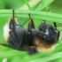 Kamanė - Bombus sp. | Fotografijos autorius : Vidas Brazauskas | © Macrogamta.lt | Šis tinklapis priklauso bendruomenei kuri domisi makro fotografija ir fotografuoja gyvąjį makro pasaulį.
