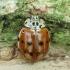 Keturdėmė boružė - Harmonia quadripunctata | Fotografijos autorius : Vidas Brazauskas | © Macrogamta.lt | Šis tinklapis priklauso bendruomenei kuri domisi makro fotografija ir fotografuoja gyvąjį makro pasaulį.
