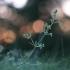 Kibusis lipikas - Galium aparine | Fotografijos autorius : Agnė Našlėnienė | © Macrogamta.lt | Šis tinklapis priklauso bendruomenei kuri domisi makro fotografija ir fotografuoja gyvąjį makro pasaulį.