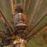 Kruvinoji skydblakė - Pinthaeus sanguinipes   Fotografijos autorius : Žilvinas Pūtys   © Macrogamta.lt   Šis tinklapis priklauso bendruomenei kuri domisi makro fotografija ir fotografuoja gyvąjį makro pasaulį.
