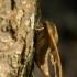 Liepinis sfinksas - Mimas tiliae | Fotografijos autorius : Dalia Račkauskaitė | © Macrogamta.lt | Šis tinklapis priklauso bendruomenei kuri domisi makro fotografija ir fotografuoja gyvąjį makro pasaulį.