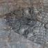 Mėlynsparnė peteliškė - Catocala fraxini | Fotografijos autorius : Žilvinas Pūtys | © Macrogamta.lt | Šis tinklapis priklauso bendruomenei kuri domisi makro fotografija ir fotografuoja gyvąjį makro pasaulį.