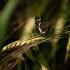 Mažasis dilgėlinukas   Fotografijos autorius : Saulius Drazdauskas   © Macrogamta.lt   Šis tinklapis priklauso bendruomenei kuri domisi makro fotografija ir fotografuoja gyvąjį makro pasaulį.
