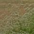 Muilinė guboja - Gypsophila paniculata | Fotografijos autorius : Kęstutis Obelevičius | © Macrogamta.lt | Šis tinklapis priklauso bendruomenei kuri domisi makro fotografija ir fotografuoja gyvąjį makro pasaulį.