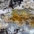 Nepažintas ... | Fotografijos autorius : Darius Baužys | © Macrogamta.lt | Šis tinklapis priklauso bendruomenei kuri domisi makro fotografija ir fotografuoja gyvąjį makro pasaulį.