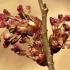 Paprastoji vinkšna - Ulmus laevis | Fotografijos autorius : Ramunė Vakarė | © Macrogamta.lt | Šis tinklapis priklauso bendruomenei kuri domisi makro fotografija ir fotografuoja gyvąjį makro pasaulį.