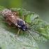 Pjūklelis audėjas - Pamphiliidae ?   Fotografijos autorius : Žilvinas Pūtys   © Macrogamta.lt   Šis tinklapis priklauso bendruomenei kuri domisi makro fotografija ir fotografuoja gyvąjį makro pasaulį.