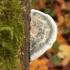 Postija - Postia alni   Fotografijos autorius : Vytautas Gluoksnis   © Macrogamta.lt   Šis tinklapis priklauso bendruomenei kuri domisi makro fotografija ir fotografuoja gyvąjį makro pasaulį.