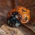Septyntaškė boružė - Coccinella septempunctata   Fotografijos autorius : Žilvinas Pūtys   © Macrogamta.lt   Šis tinklapis priklauso bendruomenei kuri domisi makro fotografija ir fotografuoja gyvąjį makro pasaulį.