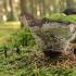 Tikrinis blizgutis - Ganoderma lucidum | Fotografijos autorius : Vytautas Gluoksnis | © Macrogamta.lt | Šis tinklapis priklauso bendruomenei kuri domisi makro fotografija ir fotografuoja gyvąjį makro pasaulį.