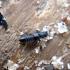 Trumpasparnis - Anotylus rugosus | Fotografijos autorius : Vitalii Alekseev | © Macrogamta.lt | Šis tinklapis priklauso bendruomenei kuri domisi makro fotografija ir fotografuoja gyvąjį makro pasaulį.