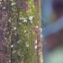 Uodas - Limonia nubeculosa | Fotografijos autorius : Romas Ferenca | © Macrogamta.lt | Šis tinklapis priklauso bendruomenei kuri domisi makro fotografija ir fotografuoja gyvąjį makro pasaulį.