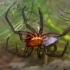 Vandeninis sidabriukas - Argyroneta aquatica | Fotografijos autorius : Gintautas Steiblys | © Macrogamta.lt | Šis tinklapis priklauso bendruomenei kuri domisi makro fotografija ir fotografuoja gyvąjį makro pasaulį.
