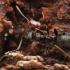Skruzdėlė - Formica (Serviformica) sp. | Fotografijos autorius : Gintautas Steiblys | © Macrogamta.lt | Šis tinklapis priklauso bendruomenei kuri domisi makro fotografija ir fotografuoja gyvąjį makro pasaulį.