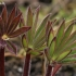 Gausialapiai lubinai - Lupinus polyphyllus   Fotografijos autorius : Gintautas Steiblys   © Macrogamta.lt   Šis tinklapis priklauso bendruomenei kuri domisi makro fotografija ir fotografuoja gyvąjį makro pasaulį.