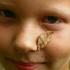 Jaunasis drugių tramdytojas  | Fotografijos autorius : Gintautas Steiblys | © Macrogamta.lt | Šis tinklapis priklauso bendruomenei kuri domisi makro fotografija ir fotografuoja gyvąjį makro pasaulį.